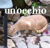 New Cat Pics.